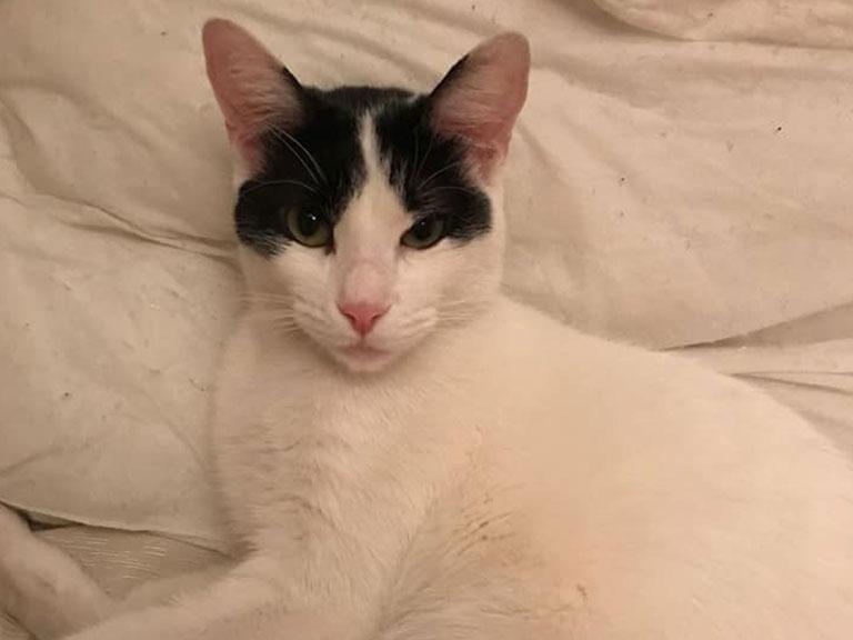 Gato en adopción - Amparo Animal
